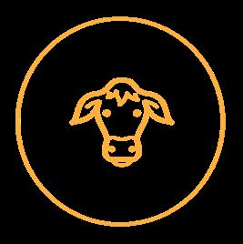 Haarla icons website Dairy